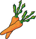 Vector Carrots Stock Image