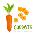 Vector carrots isolated on white background.Vegetable illustration for farm market menu. Healthy food design poster