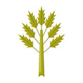 Vector cartoon celery