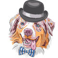 Vector cartoon hipster dog australian shepherd funny red breed aussie or little blue in a black hat and bow tie Stock Photo