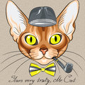 Vector cartoon hipster red cat abyssinian breed color sketch of the with flashing amber eyes in a gray hat bow tie with tobacco Stock Photos
