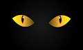 Vector cats eyes in dark night isolation Royalty Free Stock Photo