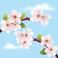 Vector cherry branch Royalty Free Stock Photos