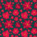 Vector Christmas seamless pattern red Poinsettias