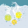 Vector of citrus in the water Stock Photography