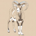 Vector closeup portrait of funny alpine ibex sketch Stock Photo
