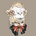 Vector closeup portrait of funny camel hipster sketch in brown glasses and bowtie Royalty Free Stock Photo