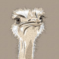 Vector closeup portrait of funny ostrich bird sketch Stock Photos