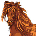 Vector closeup portrait of red horse close up beautiful with long mane Stock Photo
