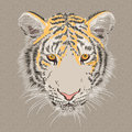 Vector closeup portrait of a serious  tiger Stock Photography