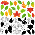 Vector collection of autumn silhouettes and outline leaves green Stock Image