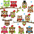 Vector collection of christmas holiday themed owls and branches Stock Photos