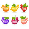 Vector collection of fresh stylized fruits and berries Royalty Free Stock Photo