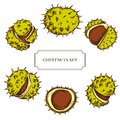 Vector collection of hand drawn buckeyes highly detailed Royalty Free Stock Photo