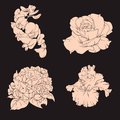 Vector collection of hand drawn floral illustration .