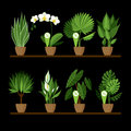 Vector collection of indoor, house plants in pots on a shelf.