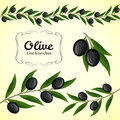 Vector collection of olive branch, black olives Royalty Free Stock Photo