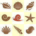 Vector collection of sea shells and snail Stock Image