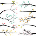 Vector Collection of Tree Branches Royalty Free Stock Photo