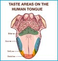 Vector - Color map of taste receptors in the tongue, four flavors - sweet, sour, bitter, salty. Vector illustration Royalty Free Stock Photo