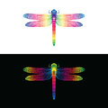 Vector of colorful dragonfly design. insect Animal.