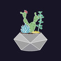 Vector colorful illustration with cactus and succulents in geometric pot