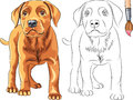 Vector Coloring Book of red Puppy dog Labrador Ret