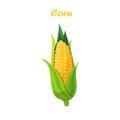 Vector corn cob