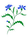 Vector cornflower Stock Photography