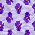 Vector craft paper with iris flowers seamless pattern eps Stock Images