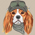 Vector cute hipster dog cavalier king charles span red spaniel breed in cap and cravat khakis and glasses Royalty Free Stock Images