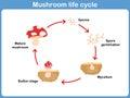 Vector Cycle of mushroom for kids