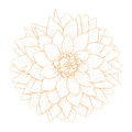Vector dahlia flower. Royalty Free Stock Photo