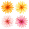 Vector  daisy flowers set  isolated on white Stock Photography