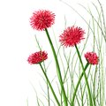 Vector decorative flowers and grass illustration eps no effects Stock Photo