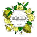 Vector design lemon with ink hand drawn. Whole,sliced pieces half, leave sketch. Fruit engraved style illustration