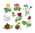 Vector design set flowers garden and meadow flower and berries Stock Photography