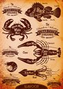 Vector diagram cut carcasses seafood set of Stock Images