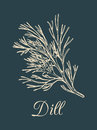 Vector dill illustration on dark background. Hand drawn sketch of spice plant. Botanical drawing of aromatic herb.