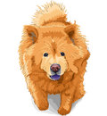 Vector Dog chow-chow breed Royalty Free Stock Images