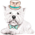 Vector dog west highland white terrier breed in ha color sketch closeup portrait serious a beige silk hat and bow tie Royalty Free Stock Photos