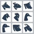 Vector domesticated animals icons set horse and sheep cow chicken rooster duck goose pig and goat Royalty Free Stock Photos
