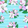 Vector drawing of apple blossoms seamless pattern Royalty Free Stock Photography