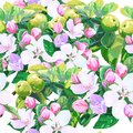 Vector drawing of apple blossoms seamless pattern Stock Photos