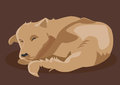 Vector drawing of brown dog sleeping Royalty Free Stock Photo