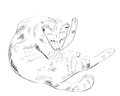 Vector Drawing of cat Royalty Free Stock Images