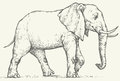 Vector drawing. Elephant Royalty Free Stock Photo