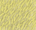 Vector drawing field golden barley ready to harvest Stock Image