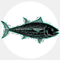 Vector drawing of freshwater fish with fins, underwater life ill Royalty Free Stock Photo