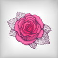 Vector drawing of pink rose Stock Image